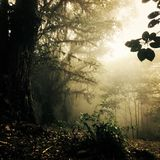 Perfect view of the rainforest, some fog appearing in the afternoon. This forest is located in Alajuela, Costa Rica. Beautiful plants and trees can be found in Royalty Free Stock Photography