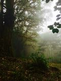 Perfect view of the rainforest, some fog appearing in the afternoon. This forest is located in Alajuela, Costa Rica. Beautiful plants and trees can be found in Stock Images