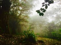 Perfect view of the rainforest, some fog appearing in the afternoon. This forest is located in Alajuela, Costa Rica. Beautiful plants and trees can be found in Stock Photo