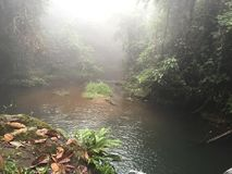 Perfect view of a small creek in the rainforest, some fog appearing in the afternoon. This forest is located in Alajuela, Costa Rica. Beautiful plants and Stock Images