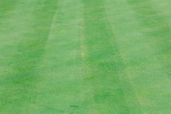 Perfect wavy green ground on a golf course Royalty Free Stock Images