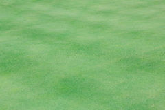 Perfect wavy green ground on a golf course Royalty Free Stock Photos