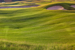 Perfect wavy ground with green grass on a golf field Stock Images