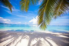Perfect white beach with green palms and turquoise Stock Photography