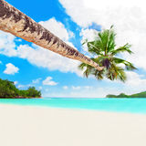 Perfect white sandy palm beach Baie Lazare, Mahe island, Seychel Stock Photo