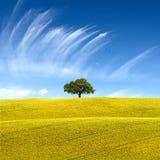 Perfect świat Zdjęcie Royalty Free