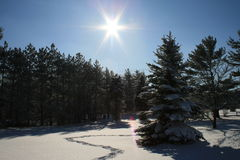 Perfect Winter Day Royalty Free Stock Photos