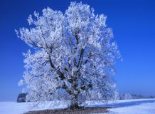 Perfect Winter Day #7 Royalty Free Stock Image