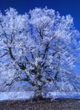 Perfect Winter Day #8 Royalty Free Stock Photos