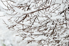 Perfect Winter Day Royalty Free Stock Image