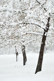 Perfect Winter Day. Hoarfrost covered tree on a perfect winter day Royalty Free Stock Image