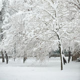 Perfect Winter Day. Hoarfrost covered tree on a perfect winter day Royalty Free Stock Photos