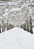 Perfect Winter Day royalty free stock images
