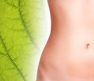 Perfect woman belly. Stock Photography