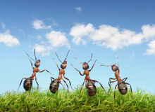 Perfect work team concept, ants under blue sky Stock Images