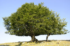 Perfecte bomen Stock Foto's