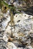 Perfecte camouflage met het omringen van milieu - bruine anole stock afbeeldingen
