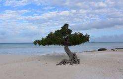 Perfecte Dag op Eagle Beach in Aruba stock fotografie