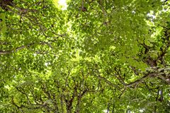 Perfecte levendige bomen groene bladeren stock foto