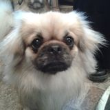 Perfecte vastgestelde foto van leuke hond Royalty-vrije Stock Foto
