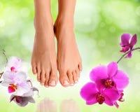 Perfecte vrouwelijke voeten Stock Fotografie
