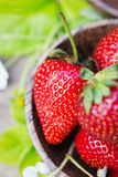 Perfecte zoete rijpe aardbeien op houten achtergrond Stock Foto