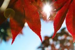 Perfectionnez le jour d'automne Photos libres de droits