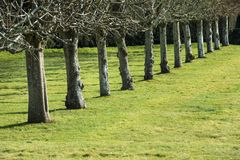 Line of trees on grass in strong sunshine royalty free stock photo