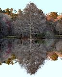 Lake Alice Quite Winter Reflection. Perfectly calm early winter evening at Lake Alice in north Florida on the University of Florida campus stock images