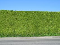 Perfectly manicured hedge Stock Images