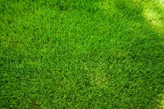 Perfectly mowed fresh garden lawn in summer. Green grass with sunspots. Perfectly mowed fresh garden lawn in summer. Vibrant green grass with sunspots stock image