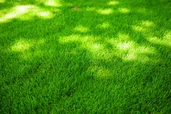 Perfectly mowed fresh garden lawn in summer. Green grass with sunspots. Perfectly mowed fresh garden lawn in summer. Vibrant green grass with sunspots royalty free stock photos