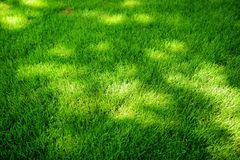 Perfectly mowed fresh garden lawn in summer. Green grass with sunspots. stock photo