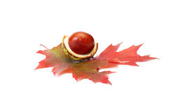 Perfectly nice chestnut and autumn leaves. Stock Images