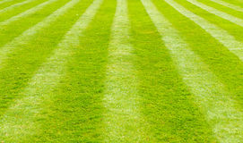 Perfectly striped freshly mowed garden lawn Royalty Free Stock Photography