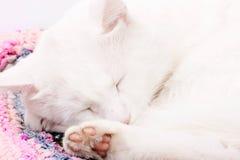 Perfectly white cat sleeping Royalty Free Stock Photos