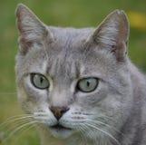 Perfeitamente gato Foto de Stock