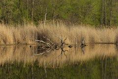 Perfekt afternmoon på sjön Arkivfoto