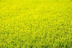 Perfekt bakgrund för grönt gräs för kort snitt arkivbild