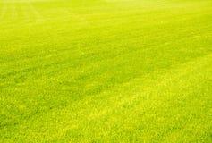 Perfekt bakgrund för grönt gräs för kort snitt royaltyfri bild