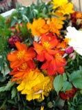 perfekt blomma royaltyfria bilder