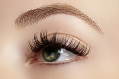 Perfekt form av ögonbryn, bruna ögonskuggor och långa ögonfrans Closeupmakroskott av rökig ögonanlete för mode arkivfoto