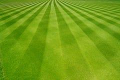 Perfekt gjord randig nytt mejad trädgårds- gräsmatta