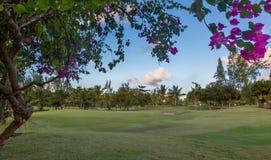 Perfekt golfbanafarled och gräsplan Fotografering för Bildbyråer