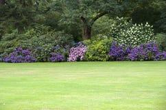 Perfekt gräsmatta för blommaträdgård royaltyfri fotografi