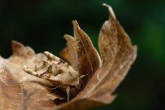 perfekt kamouflage Royaltyfri Bild