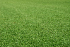 perfekt lawn Arkivfoton