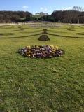 Perfekt manicured gräsmatta och blomma Arkivbilder