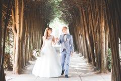 Perfekt parbrud, brudgum som poserar och kysser i deras bröllopdag Fotografering för Bildbyråer