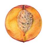 perfekt persika Arkivbilder